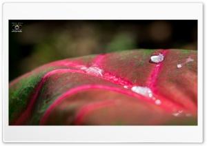 Due Drops HD Wide Wallpaper for Widescreen
