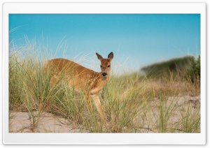 Dune Deer HD Wide Wallpaper for 4K UHD Widescreen desktop & smartphone