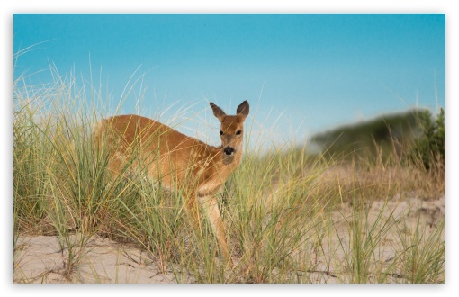 Dune Deer ❤ 4K UHD Wallpaper for Wide 16:10 5:3 Widescreen WHXGA WQXGA WUXGA WXGA WGA ; UltraWide 21:9 24:10 ; 4K UHD 16:9 Ultra High Definition 2160p 1440p 1080p 900p 720p ; UHD 16:9 2160p 1440p 1080p 900p 720p ; Standard 4:3 5:4 3:2 Fullscreen UXGA XGA SVGA QSXGA SXGA DVGA HVGA HQVGA ( Apple PowerBook G4 iPhone 4 3G 3GS iPod Touch ) ; Smartphone 16:9 3:2 5:3 2160p 1440p 1080p 900p 720p DVGA HVGA HQVGA ( Apple PowerBook G4 iPhone 4 3G 3GS iPod Touch ) WGA ; Tablet 1:1 ; iPad 1/2/Mini ; Mobile 4:3 5:3 3:2 16:9 5:4 - UXGA XGA SVGA WGA DVGA HVGA HQVGA ( Apple PowerBook G4 iPhone 4 3G 3GS iPod Touch ) 2160p 1440p 1080p 900p 720p QSXGA SXGA ;