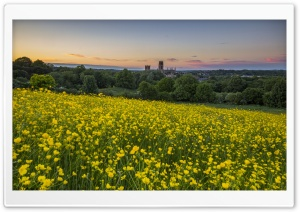 Durham Buttercup HD Wide Wallpaper for Widescreen
