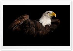 Eagle 2 Ultra HD Wallpaper for 4K UHD Widescreen desktop, tablet & smartphone