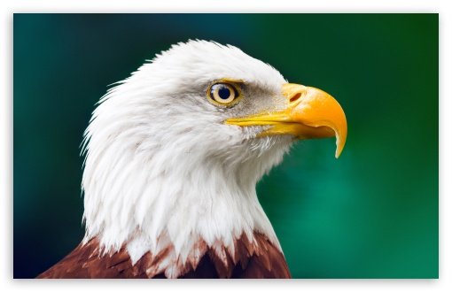 Eagle HD wallpaper for Wide 16:10 5:3 Widescreen WHXGA WQXGA WUXGA WXGA WGA ; HD 16:9 High Definition WQHD QWXGA 1080p 900p 720p QHD nHD ; Standard 4:3 5:4 3:2 Fullscreen UXGA XGA SVGA QSXGA SXGA DVGA HVGA HQVGA devices ( Apple PowerBook G4 iPhone 4 3G 3GS iPod Touch ) ; Tablet 1:1 ; iPad 1/2/Mini ; Mobile 4:3 5:3 3:2 16:9 5:4 - UXGA XGA SVGA WGA DVGA HVGA HQVGA devices ( Apple PowerBook G4 iPhone 4 3G 3GS iPod Touch ) WQHD QWXGA 1080p 900p 720p QHD nHD QSXGA SXGA ; Dual 5:4 QSXGA SXGA ;