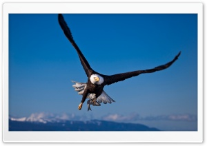 Eagle Bird Ultra HD Wallpaper for 4K UHD Widescreen desktop, tablet & smartphone
