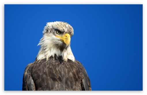 Eagle Eye HD wallpaper for Wide 16:10 5:3 Widescreen WHXGA WQXGA WUXGA WXGA WGA ; HD 16:9 High Definition WQHD QWXGA 1080p 900p 720p QHD nHD ; UHD 16:9 WQHD QWXGA 1080p 900p 720p QHD nHD ; Standard 4:3 5:4 3:2 Fullscreen UXGA XGA SVGA QSXGA SXGA DVGA HVGA HQVGA devices ( Apple PowerBook G4 iPhone 4 3G 3GS iPod Touch ) ; Tablet 1:1 ; iPad 1/2/Mini ; Mobile 4:3 5:3 3:2 16:9 5:4 - UXGA XGA SVGA WGA DVGA HVGA HQVGA devices ( Apple PowerBook G4 iPhone 4 3G 3GS iPod Touch ) WQHD QWXGA 1080p 900p 720p QHD nHD QSXGA SXGA ;