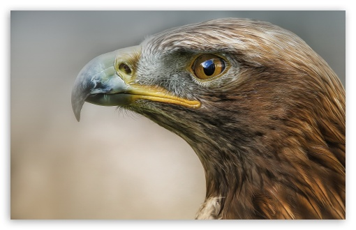 Eagle Macro Predator Bird ❤ 4K UHD Wallpaper for Wide 16:10 5:3 Widescreen WHXGA WQXGA WUXGA WXGA WGA ; 4K UHD 16:9 Ultra High Definition 2160p 1440p 1080p 900p 720p ; Standard 4:3 5:4 3:2 Fullscreen UXGA XGA SVGA QSXGA SXGA DVGA HVGA HQVGA ( Apple PowerBook G4 iPhone 4 3G 3GS iPod Touch ) ; iPad 1/2/Mini ; Mobile 4:3 5:3 3:2 16:9 5:4 - UXGA XGA SVGA WGA DVGA HVGA HQVGA ( Apple PowerBook G4 iPhone 4 3G 3GS iPod Touch ) 2160p 1440p 1080p 900p 720p QSXGA SXGA ;
