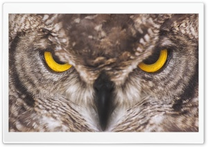 Eagle Owl HD Wide Wallpaper for Widescreen