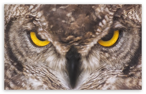 Eagle Owl HD wallpaper for Wide 16:10 5:3 Widescreen WHXGA WQXGA WUXGA WXGA WGA ; UltraWide 21:9 24:10 ; HD 16:9 High Definition WQHD QWXGA 1080p 900p 720p QHD nHD ; UHD 16:9 WQHD QWXGA 1080p 900p 720p QHD nHD ; Standard 4:3 5:4 3:2 Fullscreen UXGA XGA SVGA QSXGA SXGA DVGA HVGA HQVGA devices ( Apple PowerBook G4 iPhone 4 3G 3GS iPod Touch ) ; Smartphone 16:9 3:2 5:3 WQHD QWXGA 1080p 900p 720p QHD nHD DVGA HVGA HQVGA devices ( Apple PowerBook G4 iPhone 4 3G 3GS iPod Touch ) WGA ; Tablet 1:1 ; iPad 1/2/Mini ; Mobile 4:3 5:3 3:2 16:9 5:4 - UXGA XGA SVGA WGA DVGA HVGA HQVGA devices ( Apple PowerBook G4 iPhone 4 3G 3GS iPod Touch ) WQHD QWXGA 1080p 900p 720p QHD nHD QSXGA SXGA ;