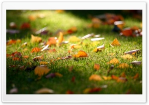 Early Fall HD Wide Wallpaper for Widescreen