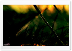 Early Morning Dew HD Wide Wallpaper for Widescreen