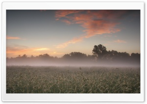 Early Morning Fog HD Wide Wallpaper for Widescreen