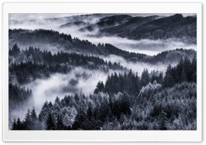 Early Morning Mist, Forest HD Wide Wallpaper for Widescreen