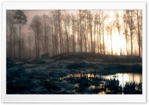 Early Morning Swamp HD Wide Wallpaper for Widescreen