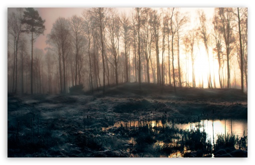 Early Morning Swamp HD wallpaper for Wide 16:10 5:3 Widescreen WHXGA WQXGA WUXGA WXGA WGA ; HD 16:9 High Definition WQHD QWXGA 1080p 900p 720p QHD nHD ; Standard 4:3 5:4 3:2 Fullscreen UXGA XGA SVGA QSXGA SXGA DVGA HVGA HQVGA devices ( Apple PowerBook G4 iPhone 4 3G 3GS iPod Touch ) ; Tablet 1:1 ; iPad 1/2/Mini ; Mobile 4:3 5:3 3:2 16:9 5:4 - UXGA XGA SVGA WGA DVGA HVGA HQVGA devices ( Apple PowerBook G4 iPhone 4 3G 3GS iPod Touch ) WQHD QWXGA 1080p 900p 720p QHD nHD QSXGA SXGA ;
