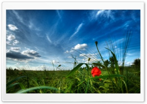 Early Summer HD Wide Wallpaper for Widescreen