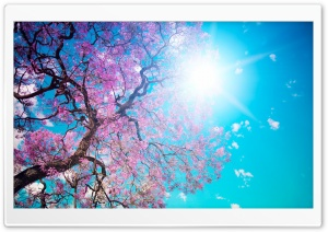 Earth Tree HD Wide Wallpaper for Widescreen