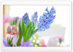 Easter 2020 Blue Hyacinth Flower, Spring HD Wide Wallpaper for 4K UHD Widescreen desktop & smartphone
