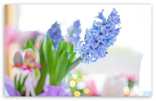 Easter 2020 Blue Hyacinth Flower, Spring UltraHD Wallpaper for Wide 16:10 5:3 Widescreen WHXGA WQXGA WUXGA WXGA WGA ; 8K UHD TV 16:9 Ultra High Definition 2160p 1440p 1080p 900p 720p ; UHD 16:9 2160p 1440p 1080p 900p 720p ; Standard 4:3 5:4 3:2 Fullscreen UXGA XGA SVGA QSXGA SXGA DVGA HVGA HQVGA ( Apple PowerBook G4 iPhone 4 3G 3GS iPod Touch ) ; Smartphone 16:9 3:2 5:3 2160p 1440p 1080p 900p 720p DVGA HVGA HQVGA ( Apple PowerBook G4 iPhone 4 3G 3GS iPod Touch ) WGA ; Tablet 1:1 ; iPad 1/2/Mini ; Mobile 4:3 5:3 3:2 16:9 5:4 - UXGA XGA SVGA WGA DVGA HVGA HQVGA ( Apple PowerBook G4 iPhone 4 3G 3GS iPod Touch ) 2160p 1440p 1080p 900p 720p QSXGA SXGA ;