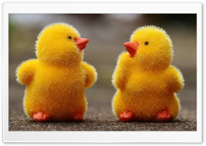 Easter Baby Chicks HD Wide Wallpaper for Widescreen