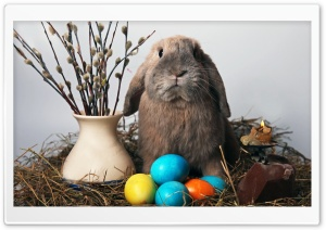Easter Bunny HD Wide Wallpaper for Widescreen