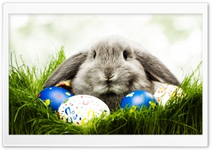 Easter Bunny HD Wide Wallpaper for 4K UHD Widescreen desktop & smartphone