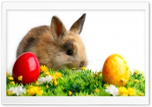 Easter Cute Rabbit HD Wide Wallpaper for Widescreen