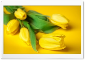 Easter Flowers HD Wide Wallpaper for Widescreen