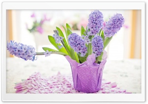 Easter Holiday 2020, Potted Hyacinths, Home Decor Ultra HD Wallpaper for 4K UHD Widescreen desktop, tablet & smartphone