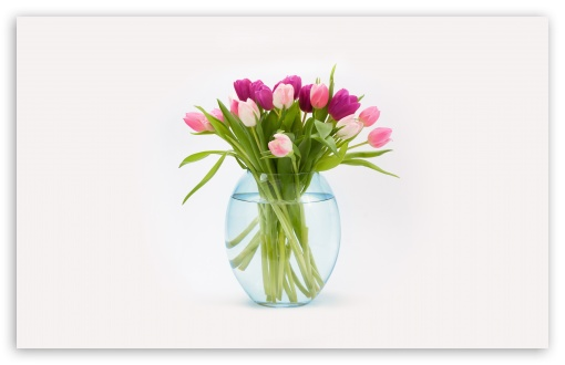 Easter Tulips Flowers Bouquet in a Vase ❤ 4K UHD Wallpaper for Wide 16:10 5:3 Widescreen WHXGA WQXGA WUXGA WXGA WGA ; 4K UHD 16:9 Ultra High Definition 2160p 1440p 1080p 900p 720p ; UHD 16:9 2160p 1440p 1080p 900p 720p ; Standard 4:3 5:4 3:2 Fullscreen UXGA XGA SVGA QSXGA SXGA DVGA HVGA HQVGA ( Apple PowerBook G4 iPhone 4 3G 3GS iPod Touch ) ; Smartphone 5:3 WGA ; Tablet 1:1 ; iPad 1/2/Mini ; Mobile 4:3 5:3 3:2 16:9 5:4 - UXGA XGA SVGA WGA DVGA HVGA HQVGA ( Apple PowerBook G4 iPhone 4 3G 3GS iPod Touch ) 2160p 1440p 1080p 900p 720p QSXGA SXGA ; Dual 16:10 5:3 16:9 4:3 5:4 WHXGA WQXGA WUXGA WXGA WGA 2160p 1440p 1080p 900p 720p UXGA XGA SVGA QSXGA SXGA ;
