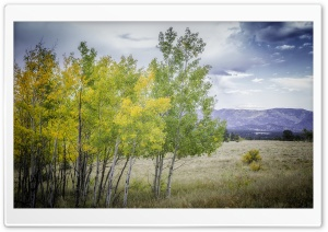 Edge of Aspen Grove HD Wide Wallpaper for 4K UHD Widescreen desktop & smartphone