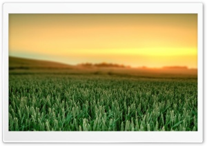 elementary OS morning Ultra HD Wallpaper for 4K UHD Widescreen desktop, tablet & smartphone