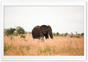 Elephant HD Wide Wallpaper for Widescreen