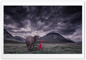 Elephant, Child Monk, Field, Storm Clouds HD Wide Wallpaper for 4K UHD Widescreen desktop & smartphone