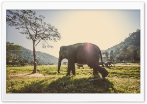 Elephant In Thailand HD Wide Wallpaper for Widescreen