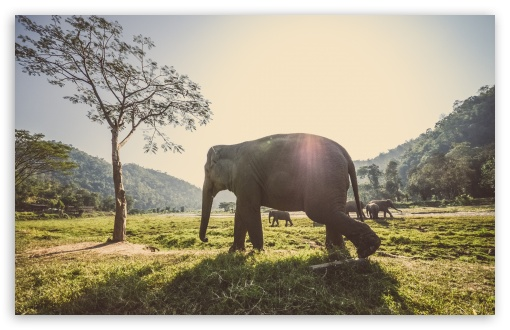 Elephant In Thailand ❤ 4K UHD Wallpaper for Wide 16:10 5:3 Widescreen WHXGA WQXGA WUXGA WXGA WGA ; 4K UHD 16:9 Ultra High Definition 2160p 1440p 1080p 900p 720p ; Standard 4:3 5:4 3:2 Fullscreen UXGA XGA SVGA QSXGA SXGA DVGA HVGA HQVGA ( Apple PowerBook G4 iPhone 4 3G 3GS iPod Touch ) ; iPad 1/2/Mini ; Mobile 4:3 5:3 3:2 16:9 5:4 - UXGA XGA SVGA WGA DVGA HVGA HQVGA ( Apple PowerBook G4 iPhone 4 3G 3GS iPod Touch ) 2160p 1440p 1080p 900p 720p QSXGA SXGA ;