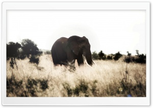 Elephant re-edited HD Wide Wallpaper for Widescreen