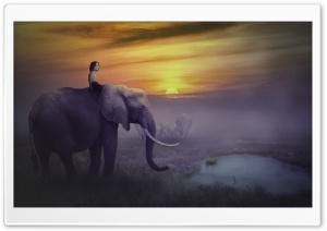 Elephant Safari HD Wide Wallpaper for Widescreen