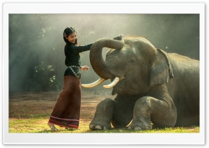 Elephant Training HD Wide Wallpaper for Widescreen