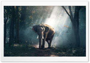 Elephant Wildlife HD Wide Wallpaper for Widescreen