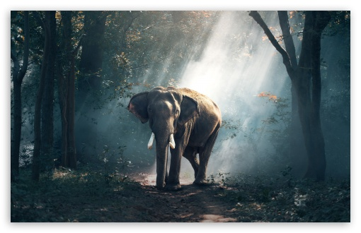 Elephant Wildlife HD wallpaper for Wide 16:10 5:3 Widescreen WHXGA WQXGA WUXGA WXGA WGA ; UltraWide 21:9 ; HD 16:9 High Definition WQHD QWXGA 1080p 900p 720p QHD nHD ; Standard 4:3 5:4 3:2 Fullscreen UXGA XGA SVGA QSXGA SXGA DVGA HVGA HQVGA devices ( Apple PowerBook G4 iPhone 4 3G 3GS iPod Touch ) ; Smartphone 16:9 3:2 5:3 WQHD QWXGA 1080p 900p 720p QHD nHD DVGA HVGA HQVGA devices ( Apple PowerBook G4 iPhone 4 3G 3GS iPod Touch ) WGA ; Tablet 1:1 ; iPad 1/2/Mini ; Mobile 4:3 5:3 3:2 16:9 5:4 - UXGA XGA SVGA WGA DVGA HVGA HQVGA devices ( Apple PowerBook G4 iPhone 4 3G 3GS iPod Touch ) WQHD QWXGA 1080p 900p 720p QHD nHD QSXGA SXGA ; Dual 16:10 5:3 16:9 4:3 5:4 3:2 WHXGA WQXGA WUXGA WXGA WGA WQHD QWXGA 1080p 900p 720p QHD nHD UXGA XGA SVGA QSXGA SXGA DVGA HVGA HQVGA devices ( Apple PowerBook G4 iPhone 4 3G 3GS iPod Touch ) ;