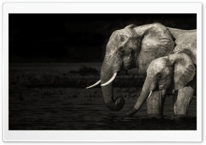Elephants HD Wide Wallpaper for Widescreen