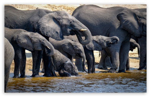 Elephants Drinking Water, Wild Animals UltraHD Wallpaper for Wide 16:10 5:3 Widescreen WHXGA WQXGA WUXGA WXGA WGA ; UltraWide 21:9 24:10 ; 8K UHD TV 16:9 Ultra High Definition 2160p 1440p 1080p 900p 720p ; UHD 16:9 2160p 1440p 1080p 900p 720p ; Standard 4:3 5:4 3:2 Fullscreen UXGA XGA SVGA QSXGA SXGA DVGA HVGA HQVGA ( Apple PowerBook G4 iPhone 4 3G 3GS iPod Touch ) ; Smartphone 16:9 3:2 5:3 2160p 1440p 1080p 900p 720p DVGA HVGA HQVGA ( Apple PowerBook G4 iPhone 4 3G 3GS iPod Touch ) WGA ; Tablet 1:1 ; iPad 1/2/Mini ; Mobile 4:3 5:3 3:2 16:9 5:4 - UXGA XGA SVGA WGA DVGA HVGA HQVGA ( Apple PowerBook G4 iPhone 4 3G 3GS iPod Touch ) 2160p 1440p 1080p 900p 720p QSXGA SXGA ; Dual 16:10 5:3 16:9 4:3 5:4 3:2 WHXGA WQXGA WUXGA WXGA WGA 2160p 1440p 1080p 900p 720p UXGA XGA SVGA QSXGA SXGA DVGA HVGA HQVGA ( Apple PowerBook G4 iPhone 4 3G 3GS iPod Touch ) ;