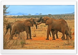 Elephants Fighting HD Wide Wallpaper for Widescreen