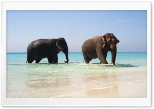 Elephants Pair HD Wide Wallpaper for Widescreen