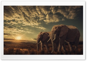 Elephants, Sunset, Nature HD Wide Wallpaper for Widescreen