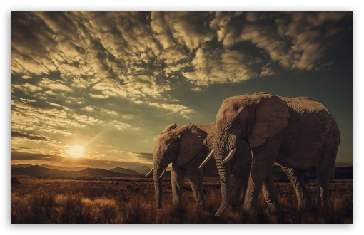 Elephants, Sunset, Nature ❤ 4K UHD Wallpaper for Wide 16:10 5:3 Widescreen WHXGA WQXGA WUXGA WXGA WGA ; 4K UHD 16:9 Ultra High Definition 2160p 1440p 1080p 900p 720p ; Standard 4:3 5:4 3:2 Fullscreen UXGA XGA SVGA QSXGA SXGA DVGA HVGA HQVGA ( Apple PowerBook G4 iPhone 4 3G 3GS iPod Touch ) ; Smartphone 16:9 3:2 5:3 2160p 1440p 1080p 900p 720p DVGA HVGA HQVGA ( Apple PowerBook G4 iPhone 4 3G 3GS iPod Touch ) WGA ; Tablet 1:1 ; iPad 1/2/Mini ; Mobile 4:3 5:3 3:2 16:9 5:4 - UXGA XGA SVGA WGA DVGA HVGA HQVGA ( Apple PowerBook G4 iPhone 4 3G 3GS iPod Touch ) 2160p 1440p 1080p 900p 720p QSXGA SXGA ;