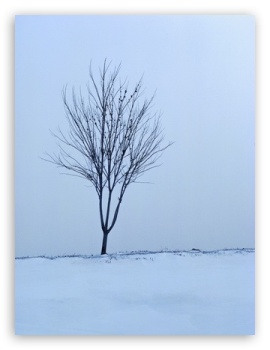 Empty Tree Winter HD wallpaper for Mobile VGA WVGA iPhone - VGA QVGA Smartphone ( PocketPC GPS iPod Zune BlackBerry HTC Samsung LG Nokia Eten Asus ) WVGA WQVGA Smartphone ( HTC Samsung Sony Ericsson LG Vertu MIO ) HVGA Smartphone ( Apple iPhone iPod BlackBerry HTC Samsung Nokia ) ;