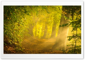 Enchanted Forest HD Wide Wallpaper for Widescreen