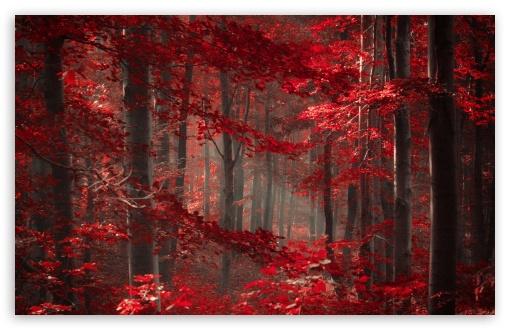 Forest 4k Quality Iphone Wallpaper: Enchanted Forest 4K HD Desktop Wallpaper For 4K Ultra HD