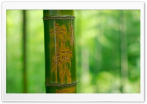 Engraved Bamboo HD Wide Wallpaper for Widescreen