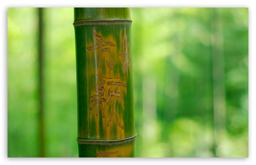 Engraved Bamboo ❤ 4K UHD Wallpaper for Wide 16:10 5:3 Widescreen WHXGA WQXGA WUXGA WXGA WGA ; 4K UHD 16:9 Ultra High Definition 2160p 1440p 1080p 900p 720p ; Standard 4:3 5:4 3:2 Fullscreen UXGA XGA SVGA QSXGA SXGA DVGA HVGA HQVGA ( Apple PowerBook G4 iPhone 4 3G 3GS iPod Touch ) ; Tablet 1:1 ; iPad 1/2/Mini ; Mobile 4:3 5:3 3:2 16:9 5:4 - UXGA XGA SVGA WGA DVGA HVGA HQVGA ( Apple PowerBook G4 iPhone 4 3G 3GS iPod Touch ) 2160p 1440p 1080p 900p 720p QSXGA SXGA ;
